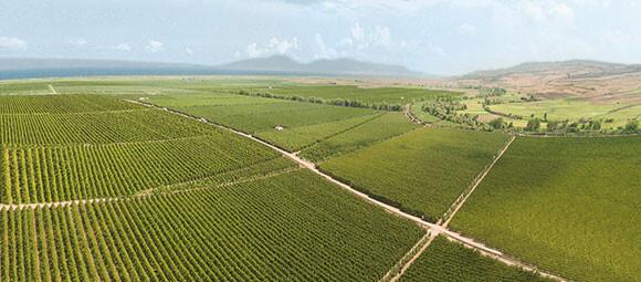 Sürdürülebilirliğimiz-için-tarımsal-üretime-odaklanmalıyız